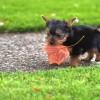 【体験談】ミックス犬(雑種)の噛み癖(甘噛み)をなおすしつけ方