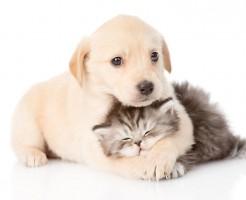 日本の犬とレトリバーの雑種