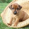 【体験談】愛犬ミニチュアピンシャーの吠え癖(無駄吠え)のしつけ方法