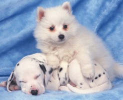 ミックス犬(雑種)