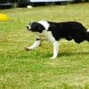 【体験談】子犬のボーダーコリーの吠え癖を訓練所に通って直したしつけ方法