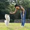 【体験談】ポメとシーズーのMIX犬(雑種)のトイレトレーニング、噛み癖、吠え癖のしつけ方