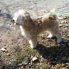 【体験談】雑種犬が覚えたお手、お座り、おかわり、トイレトレーニング、待てのしつけ方法