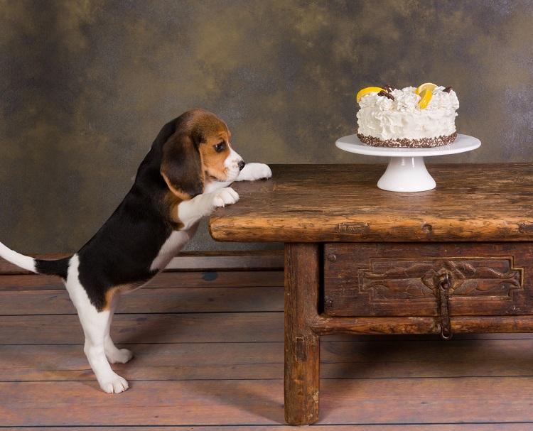 ケーキとビーグル