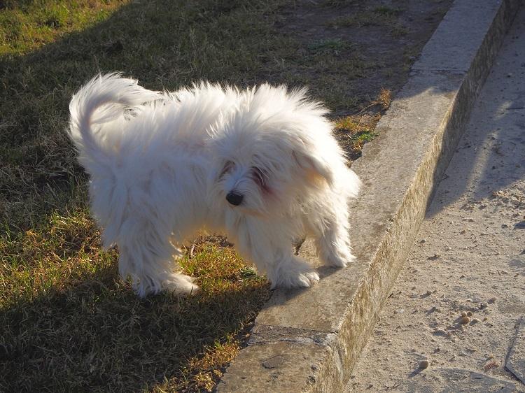 生後3ヶ月のミックス犬のために勉強したトイレトレーニングのしつけ方法