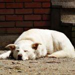 隣家の雑種犬を散歩に連れて行き、引っ張り癖をなおしたしつけ方法